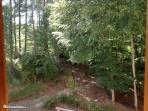 affaccio sul bosco dove spesso si possono ammirare cervi e cinghiali