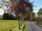 carrigmorefarm - Boreen - meaning ' a little road ' is a narrow unpaved, rural road.