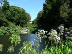Trebah Gardens - one of the many beautiful  gardens to see in our part of Cornwall