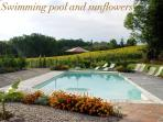 Swimming pool and sun-flowers