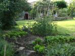 the vegetable garden for guests