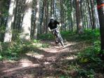 Great Mountain bike trails