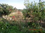 horta/quintal