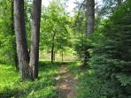 Wooded Path to Pond