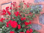 Fachada al jardin
