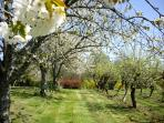 Blossom time in our orchard