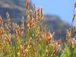 Fynbos in the Helderberg Nature Reserve