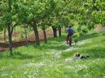 The path to Radicondoli