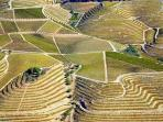 The terraces of vineyard... will give us the famous Port wine!...