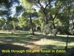 Walk through the pine forest in Zaton