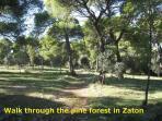 Walk through the pine forest in Zaton