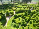 Marqueyssac - local garden, in summer they line the paths with candles as the sun goes down