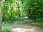 Take a relaxing stroll through the bluebell woods