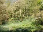 Surounding woodlands