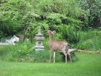 Wildlife with Stpa in South Garden