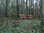 Rainforest at the Sanctuary