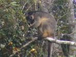 Tree Kangaroo in our Backyard