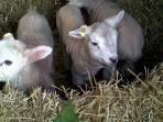 New arrivals in April