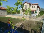 Pool Terrace & Garden