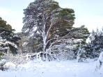 Aviemore in the winter