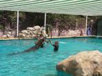 Swim with the Sea Lions at the Safari Park