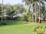 Common area lawns