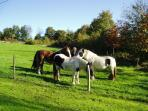 Feeding horses in the field