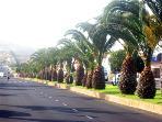 Balmy palm trees....