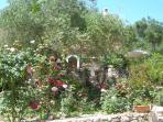 Riza's rose garden