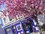 Famous local pub , the Havelock Tavern