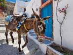 A donkey on its way to Ammoudi bay to take guests up to Oia