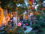Garden bathed in sunset