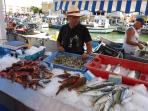 Early catches in Palavas-les Flots fresh from the sea - also nearest beaches