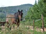 Horses around