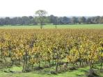 Scenic view from double bedroom overlooking vines and fields