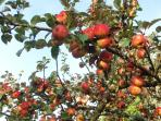 Autumn taste  from our orchards