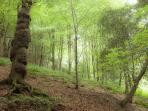 A choice of walks through natural woodland, from the doorstep