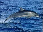 Dolphin spotting trips are available from the Marina