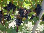 The region is famous for its Tannet grape.