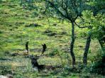 a deer in the garden