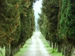 avenue of cypresses of access to the property