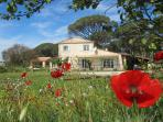 springtime at Plein Sud - Poppys surround the house