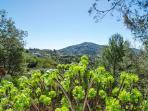 Mediterannean sloping garden