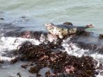 The coastline attracts a variety of wildlife