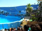 The dolphin show at Zoomarine