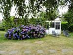 One of our Hortensia bushes with more lounging chairs.