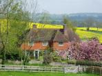 The cottages in their Spring glory