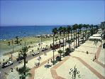 Larnaca Palm Tree promenade