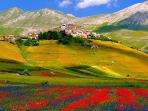 Fioritura Pianura di Castellucci - Monti Sibillini