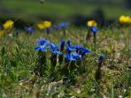 Burren Flora